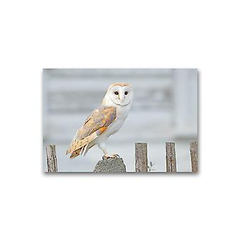 Barn Owl Sitting On Wooden Fence Poster -Image by Shutterstock