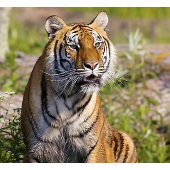PosterPrint guardando tigre