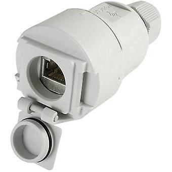 STX V6 RJ45 koppelstuk socket optie 6 Connector, rechte aantal pins: 8P8C J00020A0437 licht grijs Telegärtner J00020A0437 1 PC('s)