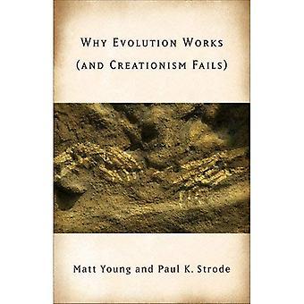 Warum die Evolution funktioniert (und Kreationismus schlägt fehl)