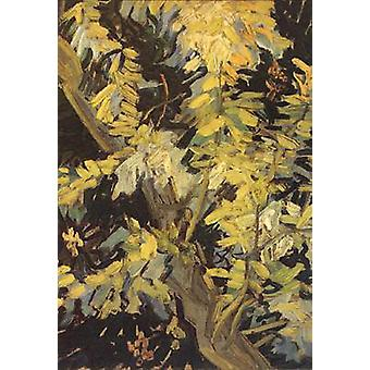 Blossoming Acaia Branches, Vincent Van Gogh, 32.5 x24cm