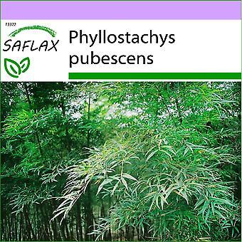 Saflax - 20 semillas - Moso bambú - Bambou Moso - Moso / Bambù gigante - Bambú moso - Moso Riesenbambus