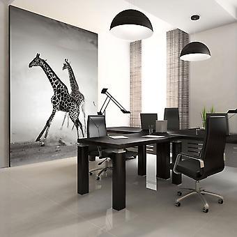 Fotobehang - Giraffen