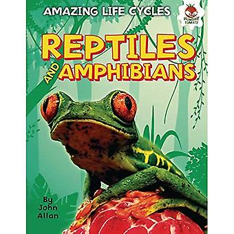 Reptiles and Amphibians (Amazing Life Cycles)