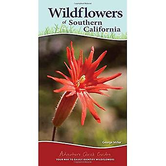 Wildflowers of Southern California (Adventure Quick Guides)