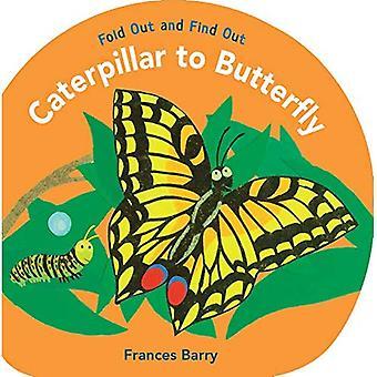 Chenille à papillon: dépliables et découvrez (dépliables et découvrir)