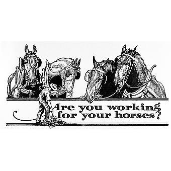 Исторический вы работать для ваших лошадей рекламы с иллюстрациями хуторянина и лошадей в начале XX века PosterPrint