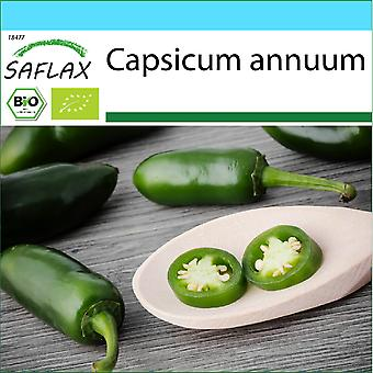 Saflax - Gift Set - 20 zaden - Biologisch - Hot Chili Pepper - Early Jalapeno - BIO - Piment - Early jalapeno - BIO - Peperoncino - Early Jalapeno - Ecológico - Chili - Jalapeño Temprano - BIO - Chili - Early Jalapeno