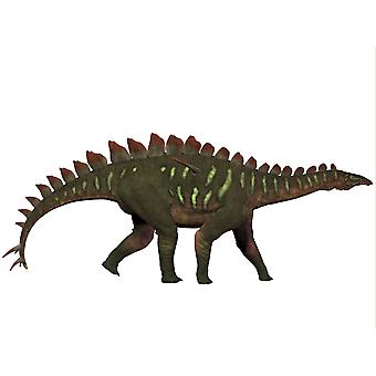 Miragaia is a genus of stegosaurid dinosaur that lived in the Upper Jurassic Period Poster Print