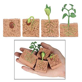 Kids Plant Seeds Growth Life Cycle Playset Cognitive Teaching Aids
