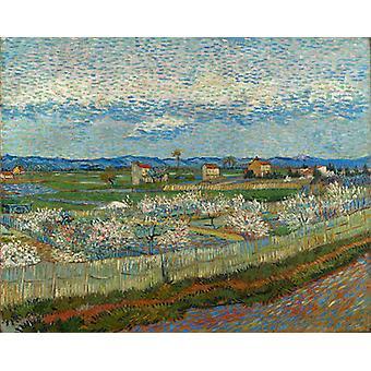 La Crau with Peach Trees in Blossom, Vincent Van Gogh, 81.5 x 65.5 cm