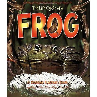 The Life Cycle of a Frog (Life Cycle)