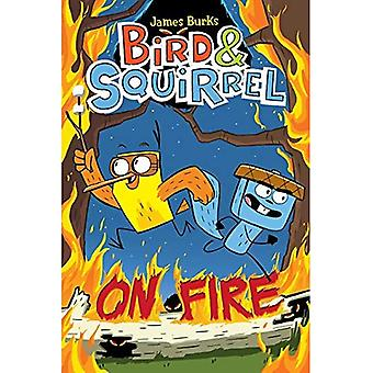 Fågel & ekorre on Fire (fågel & ekorre)