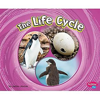 Life Cycle (Cycles of Nature)