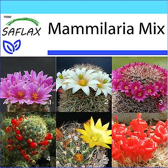 Saflax - Gift Set - 40 frön - Mammillaire Mix - Mélange de Mammillaria - Mammillaria (mix) - Mezcla mammillaria - Mammilaria Mischung