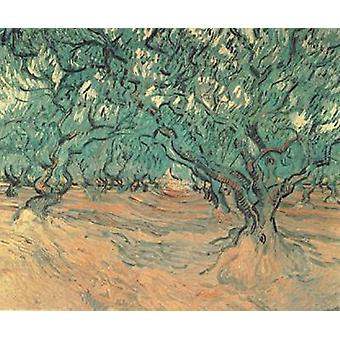 Olive Trees,Vincent Van Gogh, 45.5x59.5cm