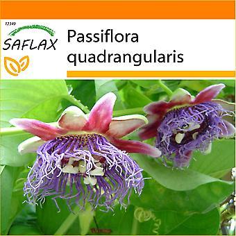 Saflax - giardino nella borsa - 12 semi - gigante Grenadilla - Grenadille géante - Granadilla - Granadilla gigante - Riesengranadilla / Königsgranadilla