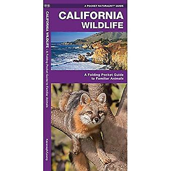 California Wildlife: An Introduction to Familiar Species