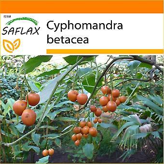 Saflax - ogród w worku - 50 nasion - Cyfomandra grubolistna - Arbre à tomates - Albero del pomodoro - Tomate de árbol - Tropischer Tomatenbaum / Cyfomandra grubolistna