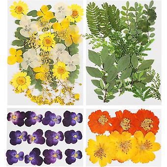 70 Pieces Assorted Real Dried Flowers Pressed Dried Flowers