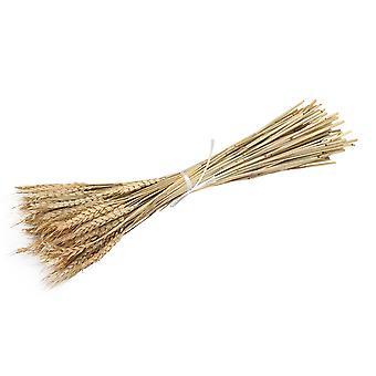 100 x Tørret hvede bundle tørt græs Plant Bouquet 60cm til Bryllup Decor
