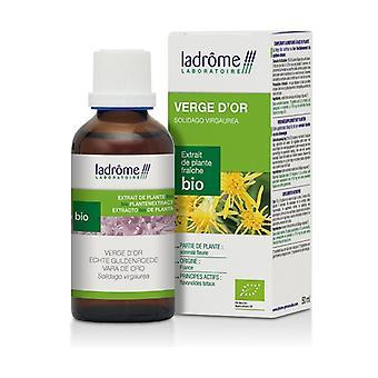 Fresh Goldenrod plant extract 50 ml
