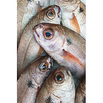 Fresh Caught Fish Tarifa Cadiz Andalusia Spain PosterPrint