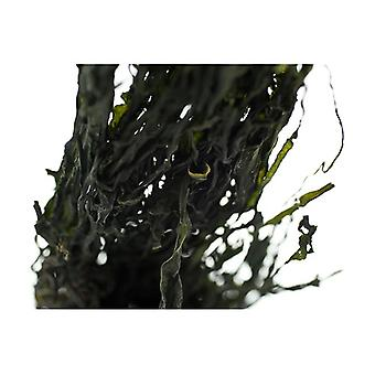 Organic Wakame Leaves 40 g