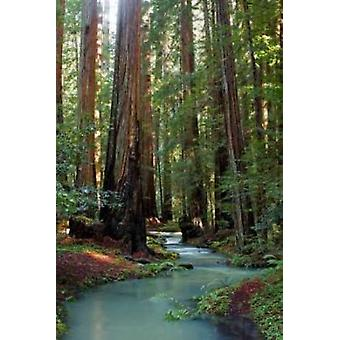 Redwood Forest III Juliste Tulosta Rita Crane