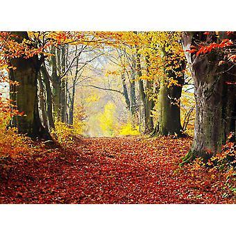 Tapetti Mural syksy metsä polku
