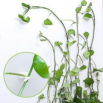 Usynlig væg Rattan Clamp Clip Plant Klatring Vinstokke Fixture Sticky Hook