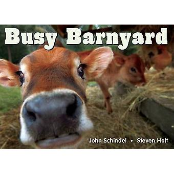 Busy Barnyard by John Schindel - Steven Holt - 9781582461687 Book
