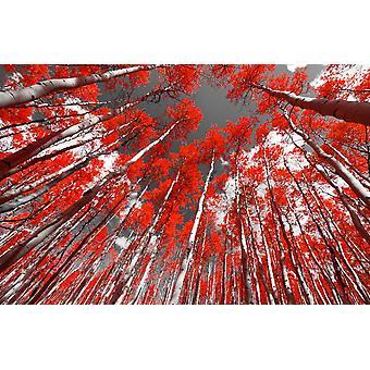 Muurschildering Rode Bomen Bos