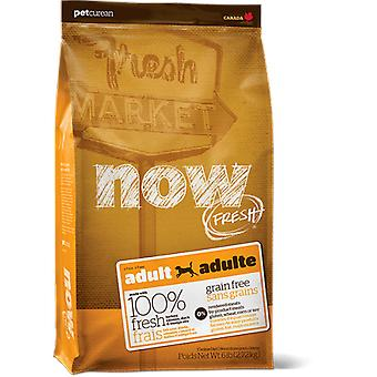 Now Grain Free Adult (dogs, food, fodder)