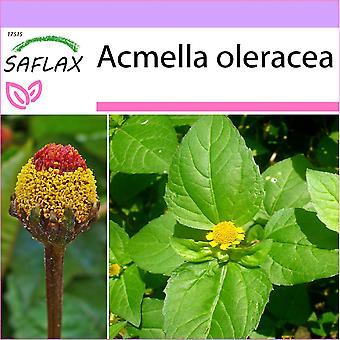 Saflax - 500 seeds - Para Cress - Brède mafane - Crescione del Brasile - Hierba de los dientes / Paracress - Parakresse