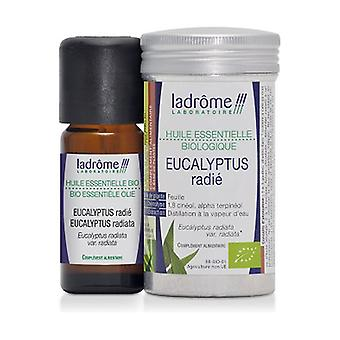 Essential Oil Eucalyptus Radié Bio 10 ml of essential oil