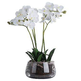 Hill Interiors Orchid In Glass Pot