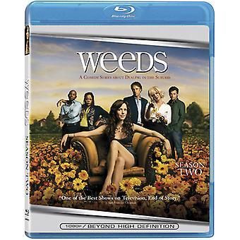 Weeds - rikkakasvit: Season 2 [BLU-RAY] Yhdysvallat tuoda