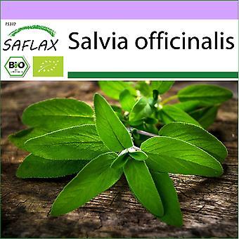 Saflax - 60 zaden - Biologisch - Salie - BIO - Sauge - BIO - Salvia - Ecológico - Salvia - BIO - Salbei