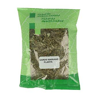 Milk Thistle Plant 40 g