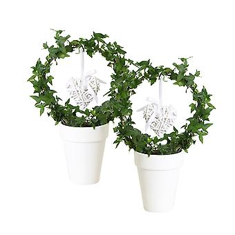 Choice of Green - Hedera helix - Ivy arc with heart - ↑ 45 CM - ceramic pot white Ø 13 CM - Hedera helix 2 pieces