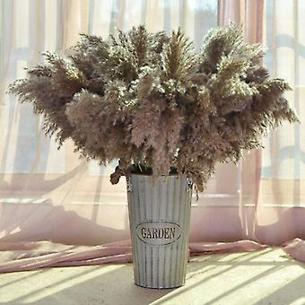 Natural Reed Dried Flower, Big Pampas Grass Bouquet, Wedding  Ceremony