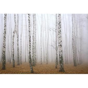 Vægmaleri Morgen tåge i efteråret