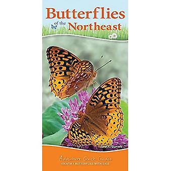 Papillons du Nord-Est (Adventure Quick Guides)