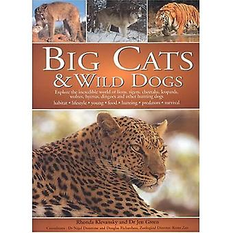 Big Cats and Wild Dogs