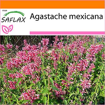 Saflax - giardino nella borsa - 50 semi - Anice Issopo gigante messicano - Agastache mexicaine - menta messicana - Toronjil morado - Limonen - Aniskraut