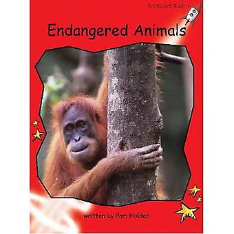 Endangered Animals Big Book Edition - Big Book Edition by Pam Holden -