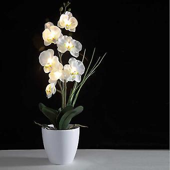 Eternal Glowing Orchid