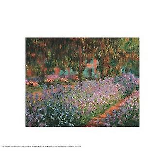 Artists Garden At Giverny 1900 Poster Print by Claude Monet (20 x 16)