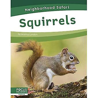 Neighborhood Safari: Squirrels